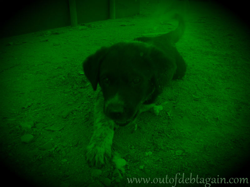 Puppy with Night Vision